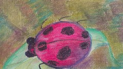 Chalk pastels for beginners - A ladybug and an owl