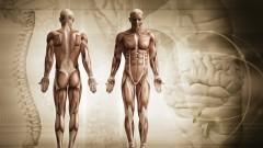 Améliorez votre posture et réduisez le mal de dos