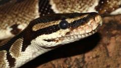 Curso completo de Python para DevOps!