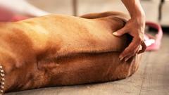 Dog Massage Training Course