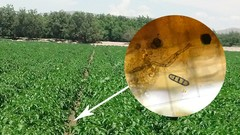 Microbial Analysis for Growers