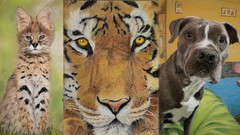 Realistic Animals with Pastels