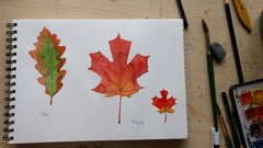Sketchbook Everyday - Leaves in Watercolor