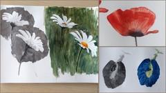 Sketchbook Everyday: Painting Flowers in Watercolor