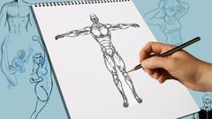 Netcurso - le-dessin-anatomique-le-cours-complet