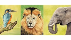 Draw Wild Animals using Pastel Pencils Volume 1