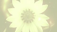 Chakra Series: The Solar Plexus Chakra (3rd Chakra)