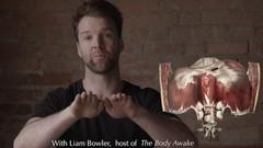 Anatomy of the Breath