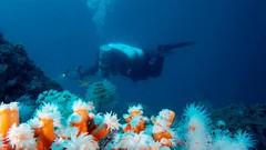 Technical diving Mix Gas Nitrox-Trimix  ( Part I ) (english) | Udemy
