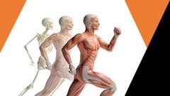 Netcurso-sistema-muscular-anatomia-humana