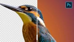 Photoshop Grundlagen - Grundkurs für jeden Einsteiger