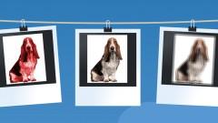 Editar y Retocar Fotografías con Picasa
