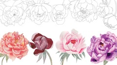 Watercolor Botanical Painting: Peony