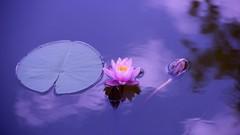 Imágen de La práctica de la mente serena. Más allá del mindfulness. 1.