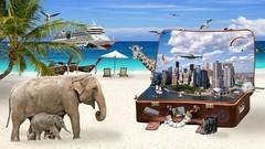 Exploring Dreams #1: Fascinating Facts & Cool Case Studies