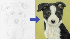Draw a Border Collie Puppy using Pastel Pencils