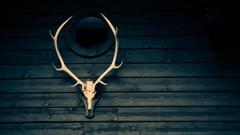 Twelve Months to Elk