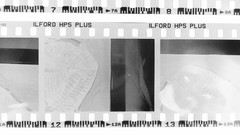 Developing and Scanning 35mm Black and White Film