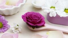 Netcurso-aprenda-sobre-plantas-medicinais-fitoterapia-e-aromaterapia