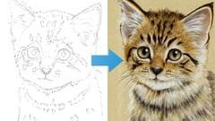 Draw a Kitten using Pastel Pencils
