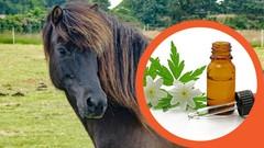 Die Bachblüten Therapie fürs Pferd