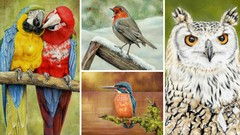Learn to Draw Birds with Pastel Pencils - 4 Course Bundle