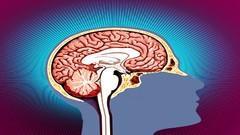Brain Health - special yoga