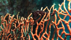 iSeahorse Trends: Finding & monitoring seahorse populations