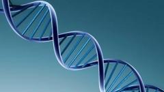 The Lunatic Gene. The Reason Your Life Will Never Make Sense