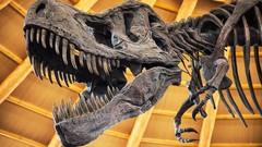 103: Did Man Walk With Dinosaurs? | Udemy