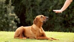 Dog Training - Tricks Level 1