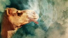 Hypnosis & EFT Stop smoking Fast track Hypnosis Program