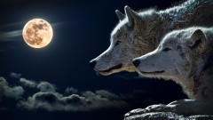 Get Paid to Learn to Write Werewolf Romance!