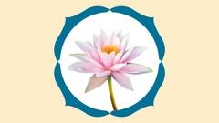 YOGABASICS kompletter Yogakurs : 20 Stunden Yoga Einsteiger