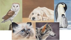 Drawing Animals using Pastel Pencils