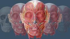 Anatomy Basics - Intro to Studying Human Anatomy