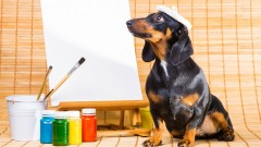 Photoshop Dog Retouching - All Tips & Tricks Covered