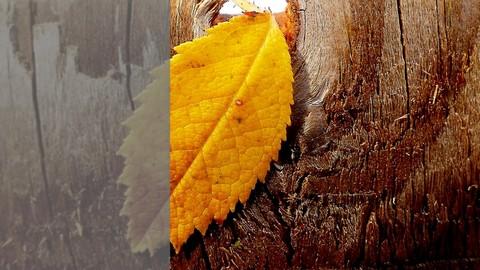 Netcurso-photoshop-para-fotografos-en-11-lecciones-rapidas