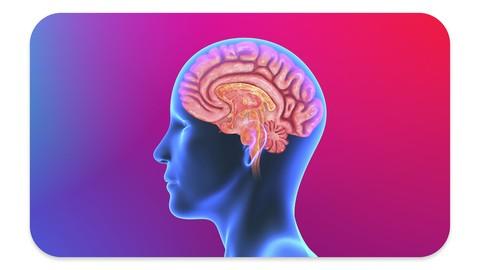 Develop A Superbrain:  Optimize Your Brain & Boost Memory