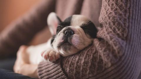 Netcurso-conoce-a-tu-cachorro-y-sus-necesidades