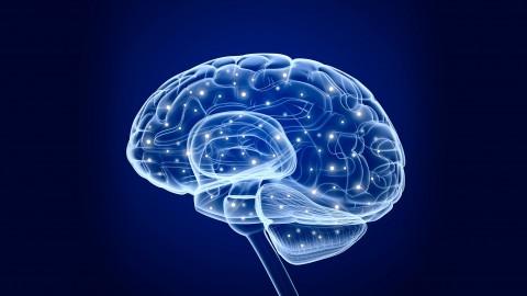 The Neuroscience of Habits