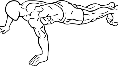 Pushups From A to Z   Udemy
