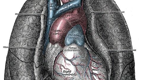 Netcurso - //netcurso.net/fisiologia-del-sistema-respiratorio