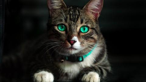 [Udemy Coupon] Aromaterapia Veterinaria – Aceites Esenciales en el Gato