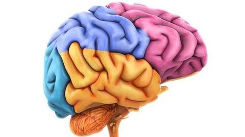 Netcurso-tecnicas-para-mejorar-el-aprendizaje-super-cerebros
