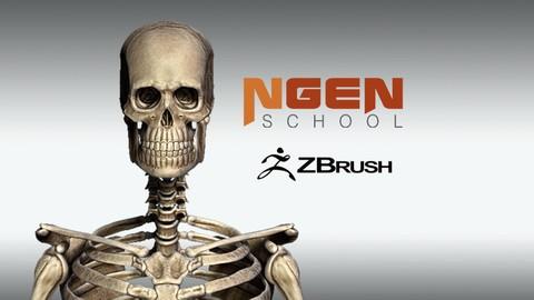 Netcurso - //netcurso.net/anatomia-zbrush-esqueleto