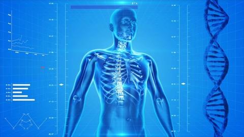 Netcurso-recuento-anatomico-premium-anatomia-humana