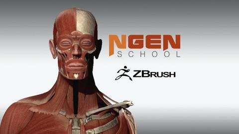 Netcurso - //netcurso.net/anatomia-aplicada-a-zbrush-parte-2-la-musculatura