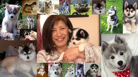 [Udemy Coupon] Pomsky Dog Care and Training Course