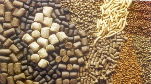 Animal Nutrition & Ration Formulation